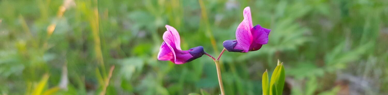 Gävleborgs Botaniska Sällskap